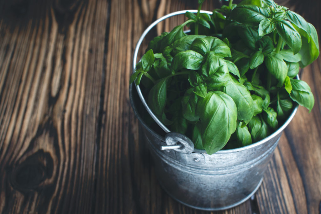 foodiesfeed.com_basil-in-bucket2-1024x683